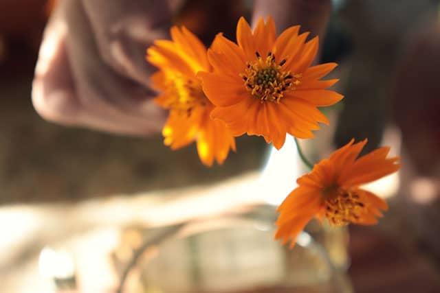 Caipirinha De Flores Com Cachaca Artesanal 10